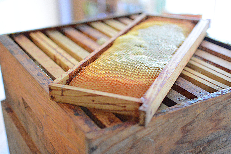 ruches à domicile