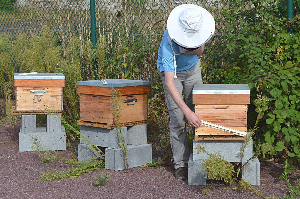 Uibie : ruches en entreprise