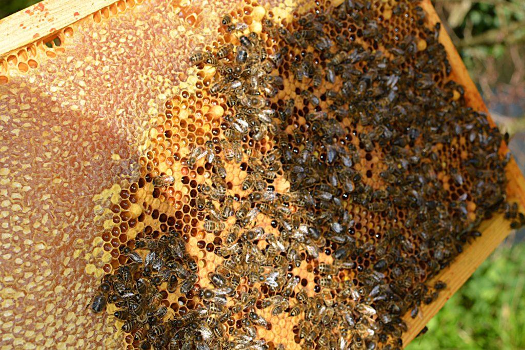 ruches fréquence bio