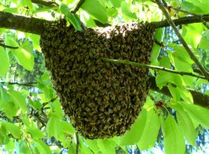 apiculteur calvados