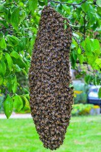 uibie apiculture