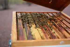 abeilles Caen