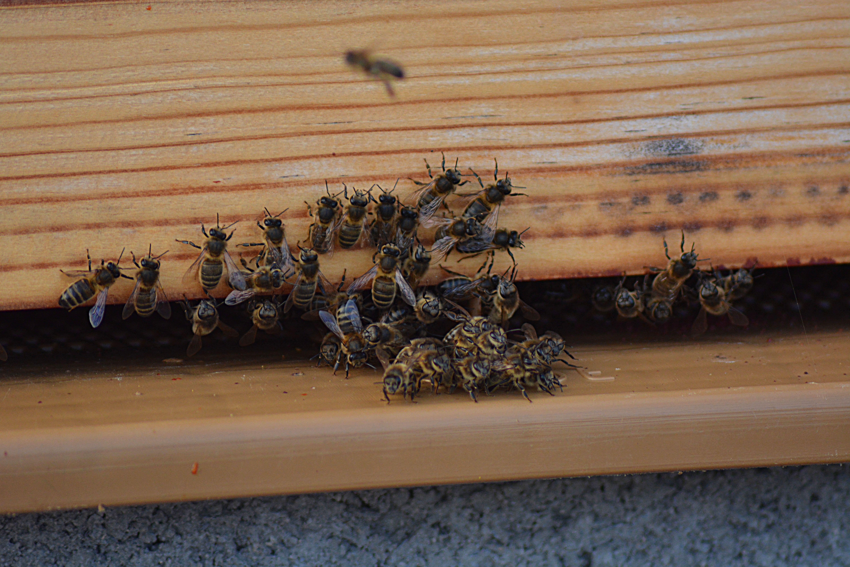 Parrainez des abeilles Uibie