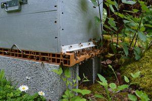 parrainage apiculteur