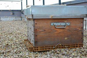 Uibie apiculture Caen