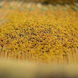 Pollen uibie