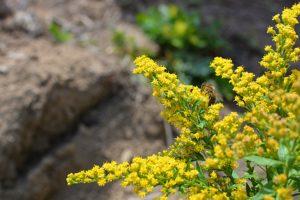 abeilles et fleurs