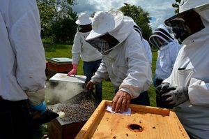 apiculture uibie