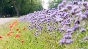 apiculteur Normandie