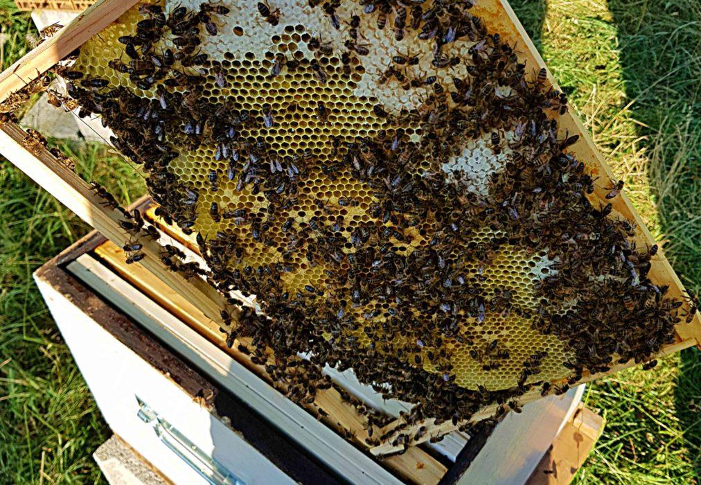 uibie abeilles parrains