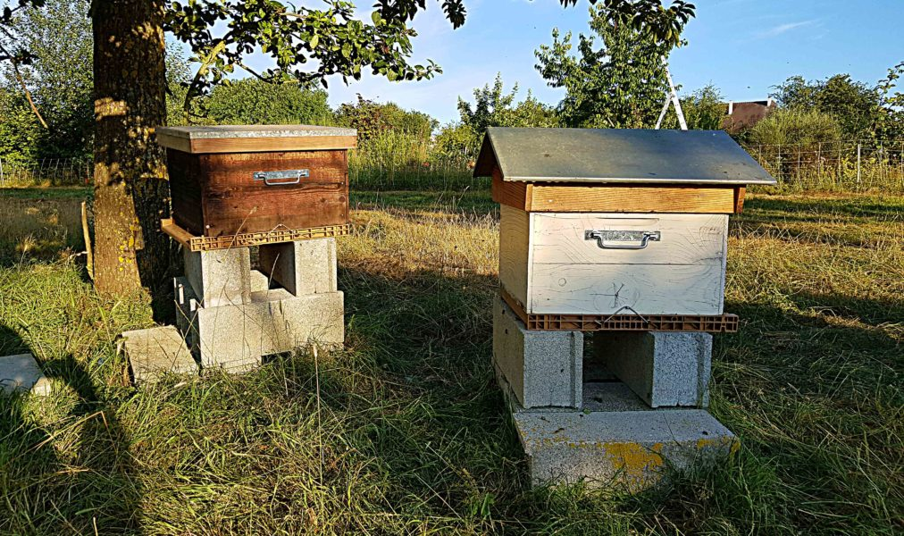 abeilles uibie