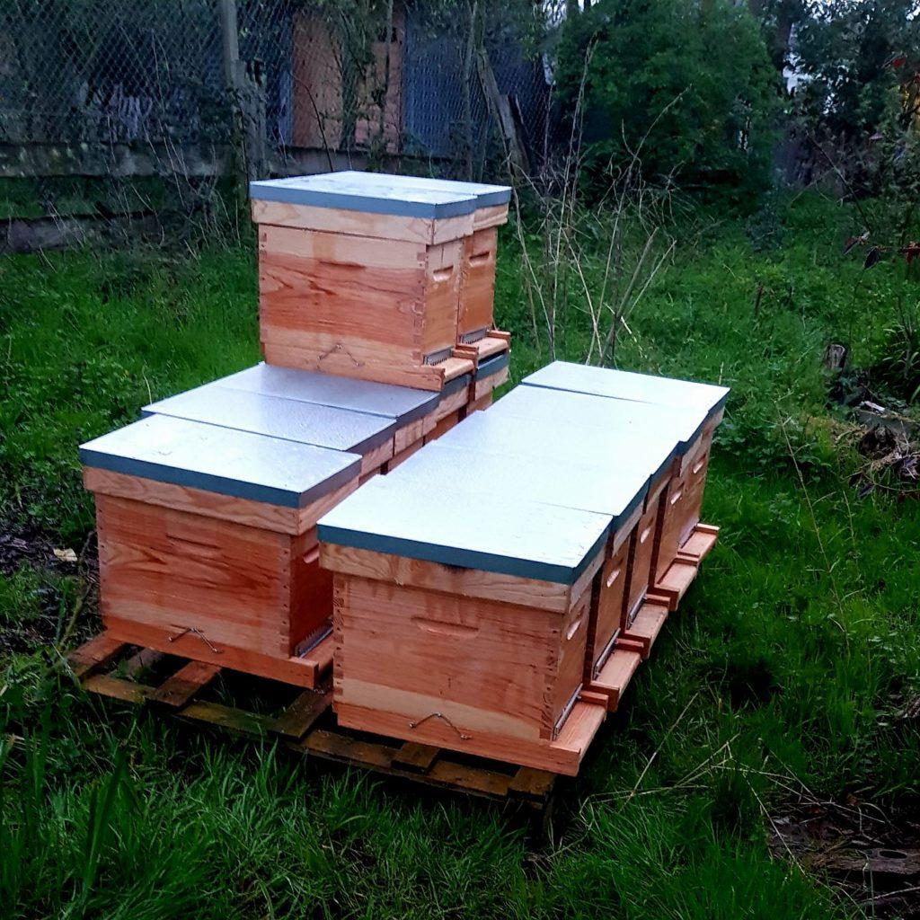 hiver apiculture