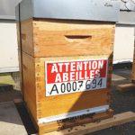 ruches en entreprise